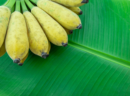 Cultivated banana on banana leaves,with copy space