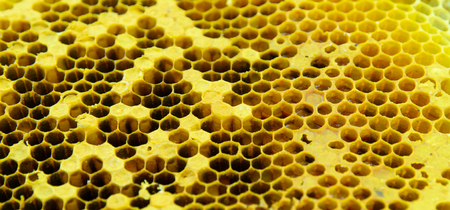 close up bee honeycomb background. honey cells Banco de Imagens