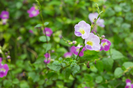 Purple flowers are blooming, the garden after the rain.