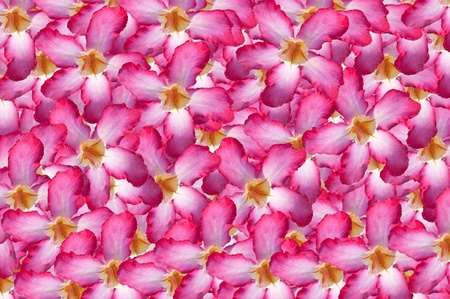 Beautiful Floral Border.Flower design  photo