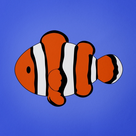 Clownfish, Amphiprion on blue background Stock Photo - 13600956