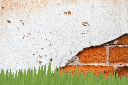 Grass on Wall Background and texture Stock Photo - 13664710