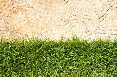 Fresh green grass on cement background  photo