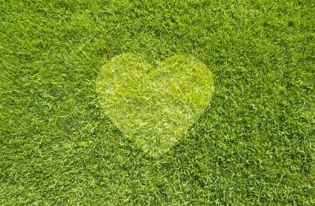 Icon Heart on green grass,  texture background 写真素材