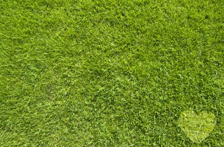 Icon Heart on green grass,  texture background Stock Photo