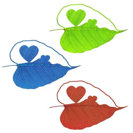 Heart of leaf on white background photo