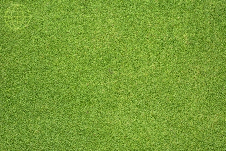Global icon on green grass background photo