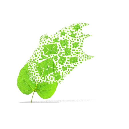 Green leaf of mail on white background photo