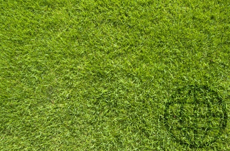 Global icon on green grass texture and  background