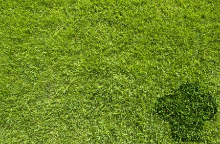 Cook icon on green grass texture and  background
