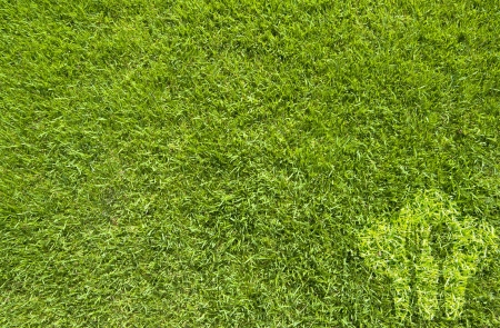 Cook and spoon on green grass texture and  background Stock Photo - 15498901
