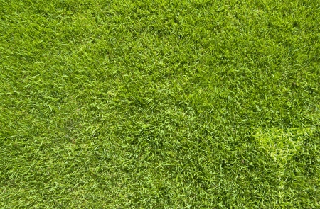 Drink icon on green grass texture and  background Stock Photo