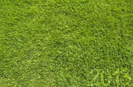 Green grass of 2013 year texture and  background Stock Photo - 15609107