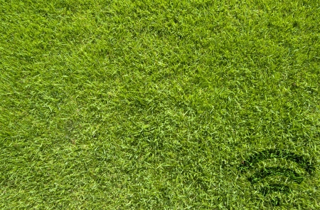 Wireless icon on green grass texture and background
