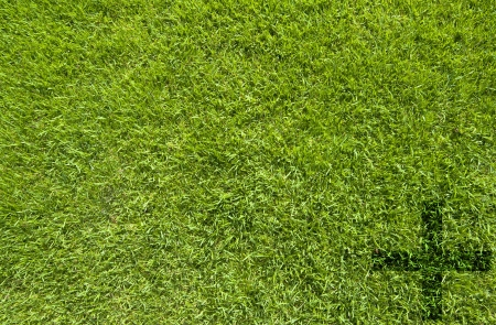Plus icon on green grass texture and background