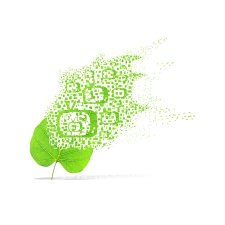 Green leaf of television on white background photo