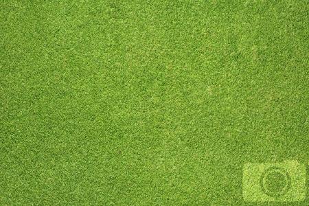 Camera icon on grass background Stock Photo - 16656906