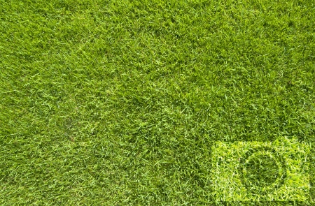 Camera icon on green grass background photo