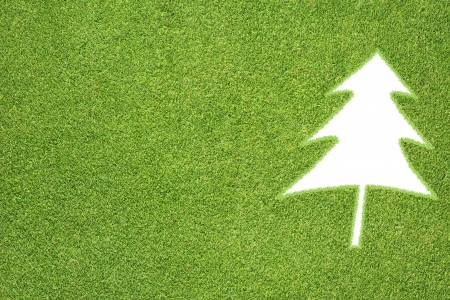 Christmas tree of green grass texture and  background Stock Photo - 16946053