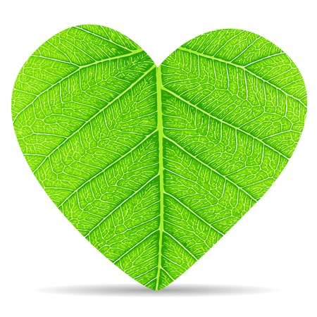 Heart green leaves Vector
