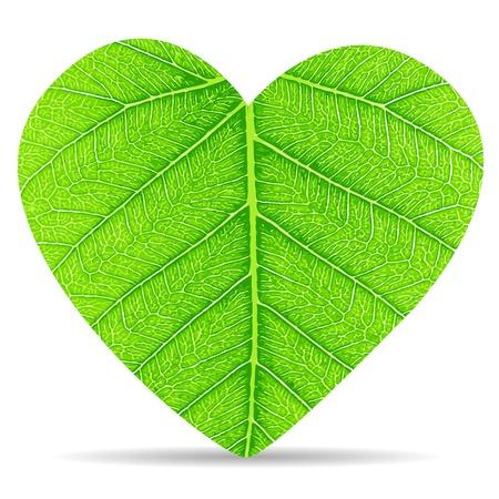Heart green leaves Stock Vector - 17195705