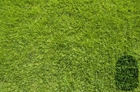 Mouse icon on green grass background Stock Photo - 17195699
