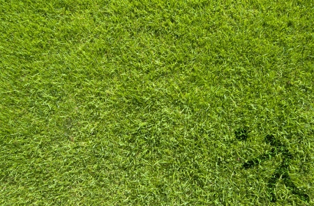 pelota de voley: Sport pelota de voleibol en textura de la hierba verde y el fondo