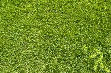 ballon volley: Volley-ball Sport sur la texture de l'herbe verte et le fond