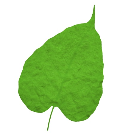 Plasticine of leaf Stock Photo - 19027468