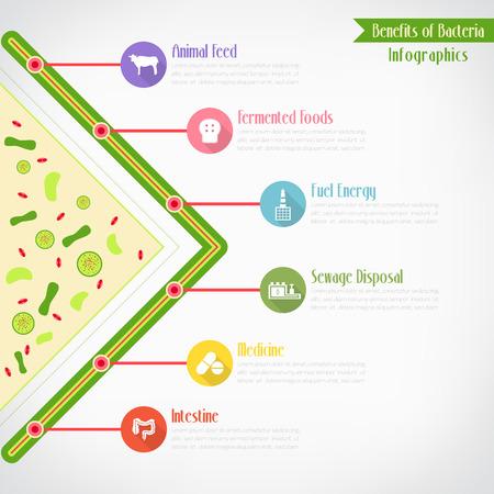 Benefits of bacteria infographics Vector
