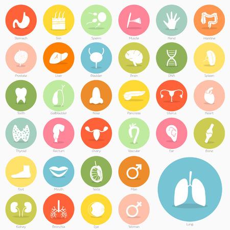 corpo umano: Icona del Corpo di design breve ombra
