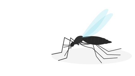 mosquito cartoon vector. wallpaper. free space for text. copy space.