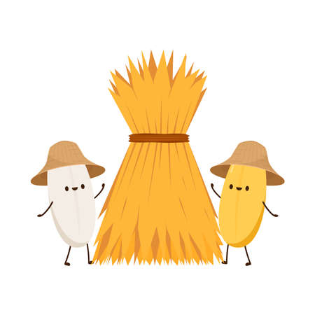 Rice character design. rice vector on white background. rice seed. Wheat straw. Illustration