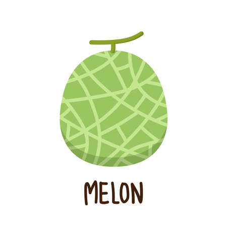 Melon vector. melon on white background. wallpaper. free space for text. Vettoriali