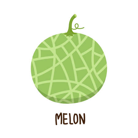melon vector. melon on white background. wallpaper. free space for text.
