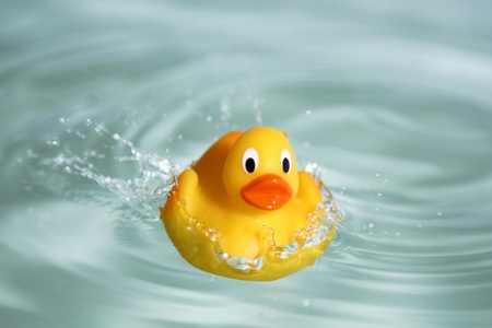 yellow duck: yellow rubber toy duck swimming in water