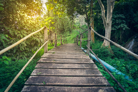 woden: Hiking Tropical Forest Woden Bridge