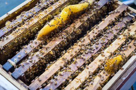 Honingraat voor hoeny farming houten kratdoos Stockfoto
