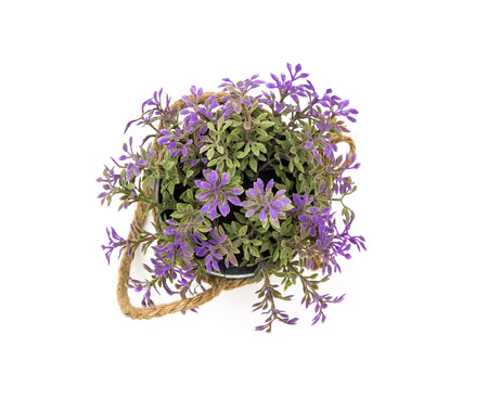 Purple flower bucket top view isolated on white