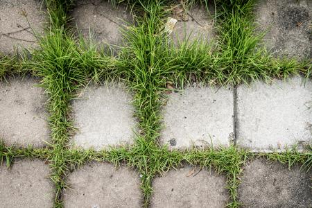 Gehender Block mit grünem Gras für Beschaffenheitshintergrund