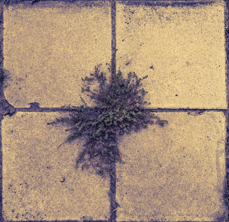 Plant is growing out of street pavement tiles