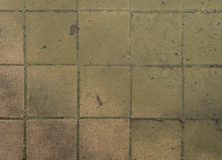 Overstroomd water bestrating betontegels met vuil en mos Stockfoto