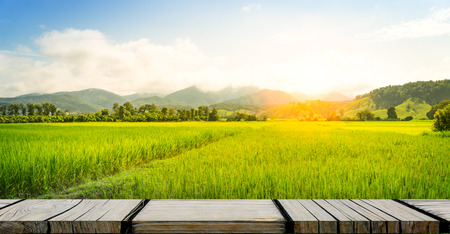 水田農場の背景に空の木製フォトフレーム 写真素材