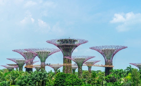 Singapore, Singapore - 31 March, 2018: The sky walk on super tree in Garden by the bay.