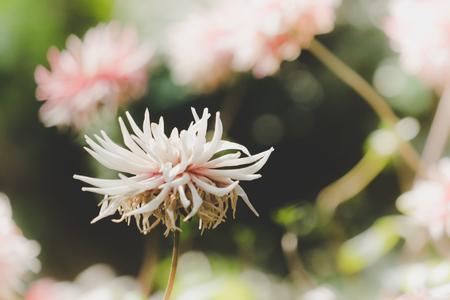 Pink White flower side view in green garden Stok Fotoğraf
