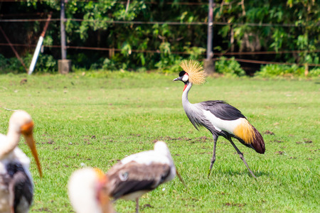 mycteria birds on grass field