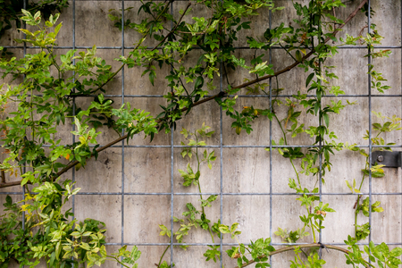 Stone concrete wall surround by plant for background