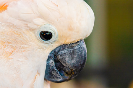 a white parrot standing closed up face