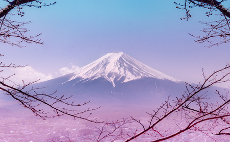 Mountain Fuji in winter framed by dry fall tree in pink color 免版税图像 - 121064138