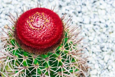 Red blooming cactus flower on top of green cactus on rock garden Stock Photo - 122404302